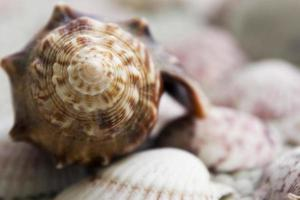 Conch Shell Background photo