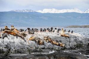 Animals on the Beagle Channel, Tierra del Fuego