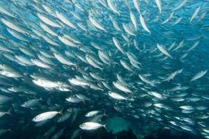 Inside a school of fish underwater
