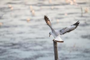 Seagulls standing on bamboo photo