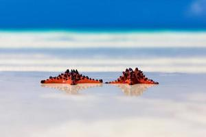 two sea-stars with wedding rings lying on sand beach