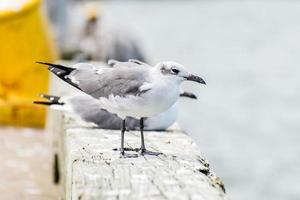 aves de la orilla del mar en blanco y negro en la isla de galveston, tx foto