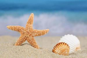 Beach scene in summer on vacation with sea shells stars