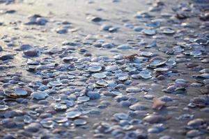 texture set of mollusk shells