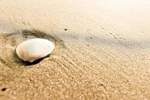 concha en una playa de arena foto