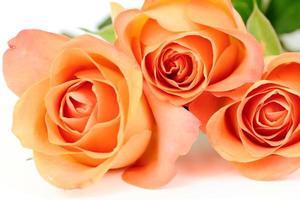 Orange roses, tea roses photo