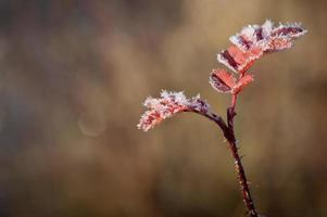 Morning frost photo