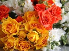 belas rosas