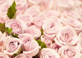 Deep Roses photo