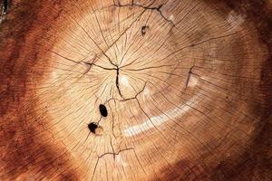 Abstract pattern circle of chopped timber