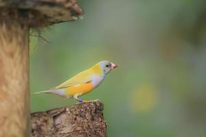 Birds Of Madagascar.