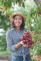 woman picking lychees in litchi orchard
