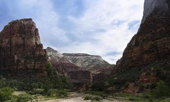 Riparian Zone in Zion National Park