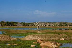 Yala national park in Sri Lanka photo