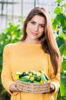 Female greenhouse worker holding a basket full of fresh cucumbers