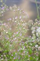 Little ironweed flower