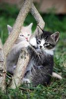 cat, kittens