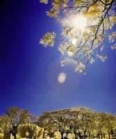 árboles dorados bajo el sol brillante foto