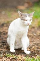 Cute white cat  in the garden photo