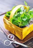 fresh herb photo