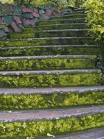 Moss covered stairs, India