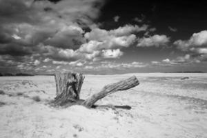 Drift sand landscape with tree trunk black and white photo