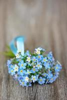 Forget-me-not photo