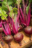 Red Beets photo