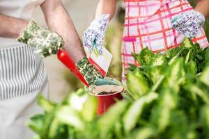 Seeding flowers in a flowerpot. photo
