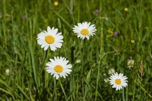 Wildflowers in Acadia National Park in Maine