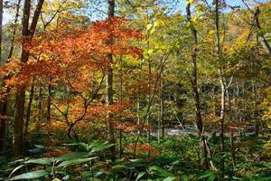 Autumn of Oirase Gorge in Aomori, Japan photo