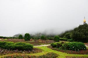 Garden in Doi Inthanon National Park