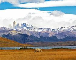 The national park Torres del Paine photo