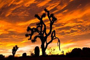 Sunset at Joshua Tree National Park photo
