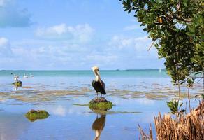pantanos de los Everglades foto