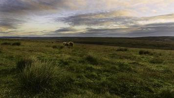 North York Moors at dawn, Levisham, Yorkshire, UK. photo