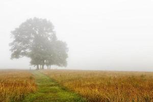 Path in the Fog