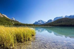 Sunwapta Lake, Jasper National Park in Alberta, Canada photo