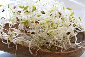 Fotografía del patrón de semillas de alfalfa germinadas para el fondo de alimentos