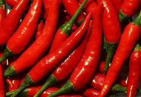 Red hot cayenne peppers