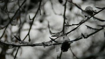 Schneefal