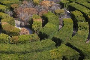 Hedges labyrinth photo