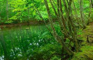 estanque tsutanuma en aomori, japón
