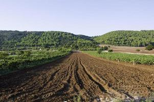 Italian wine Puglia