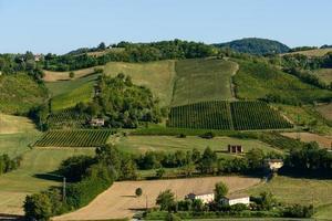 Piacenza Vineyards photo