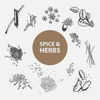 Spice and Herbs Hand Drawn Set vector