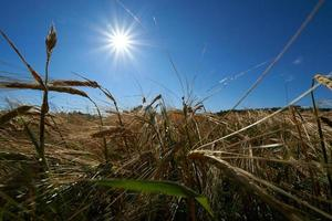 sol en el campo