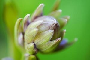 The tender Buds Of Flower on the green backgrounds. Close