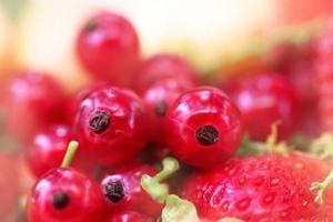 juicy red currant berries photo
