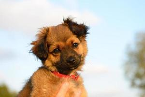Lovely puppy